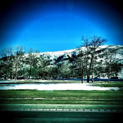 snow on grapevine (1)