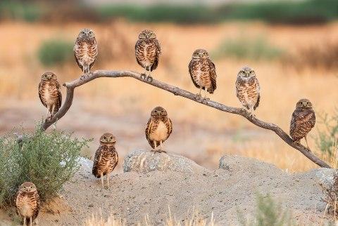 moms owls